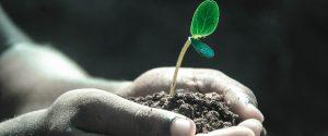 Les plantes, nos super-héroïnes du quotidien !