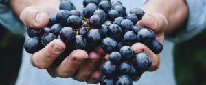 Le vin, un allié Bien-Être ?