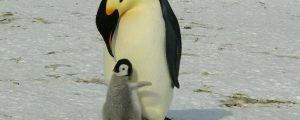 Être un parent im-parfait
