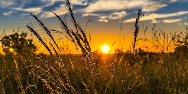 champ d'herbe avec couché de soleil